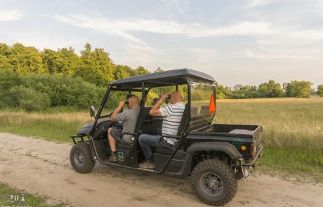 Wild Safari Wagen